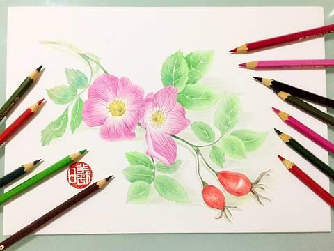 【达人专栏】小曦手绘 —— 心有猛虎,细嗅蔷薇!