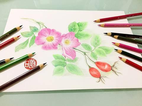 彩铅蔷薇花手绘